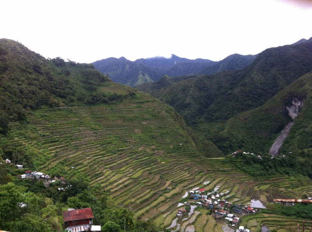 rice field of Banaue and Batad